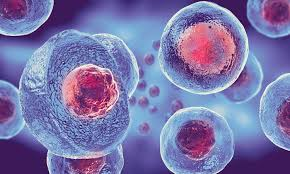 Interested in Stem Cell Injections? Increase Your Chance for Success